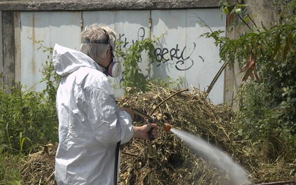 Disinfestazione zanzare e insetti