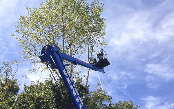 Potatura piante e alberi a basso e alto fusto