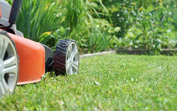 Servizi giardinaggio a Mestre