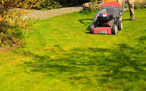 Servizi e manutenzione ordinaria di aree verdi